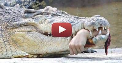 10 of the worst animal attacks with surviving victims