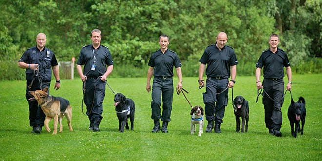 How Do Police Dog Training Leads Work