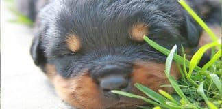 Excellent Tips For Breeding Your Dog