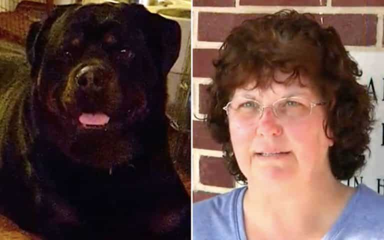 Rottweiler Saves A Woman From Tiger Attack Rottweiler Life