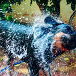 bathing tips for Rottweilers