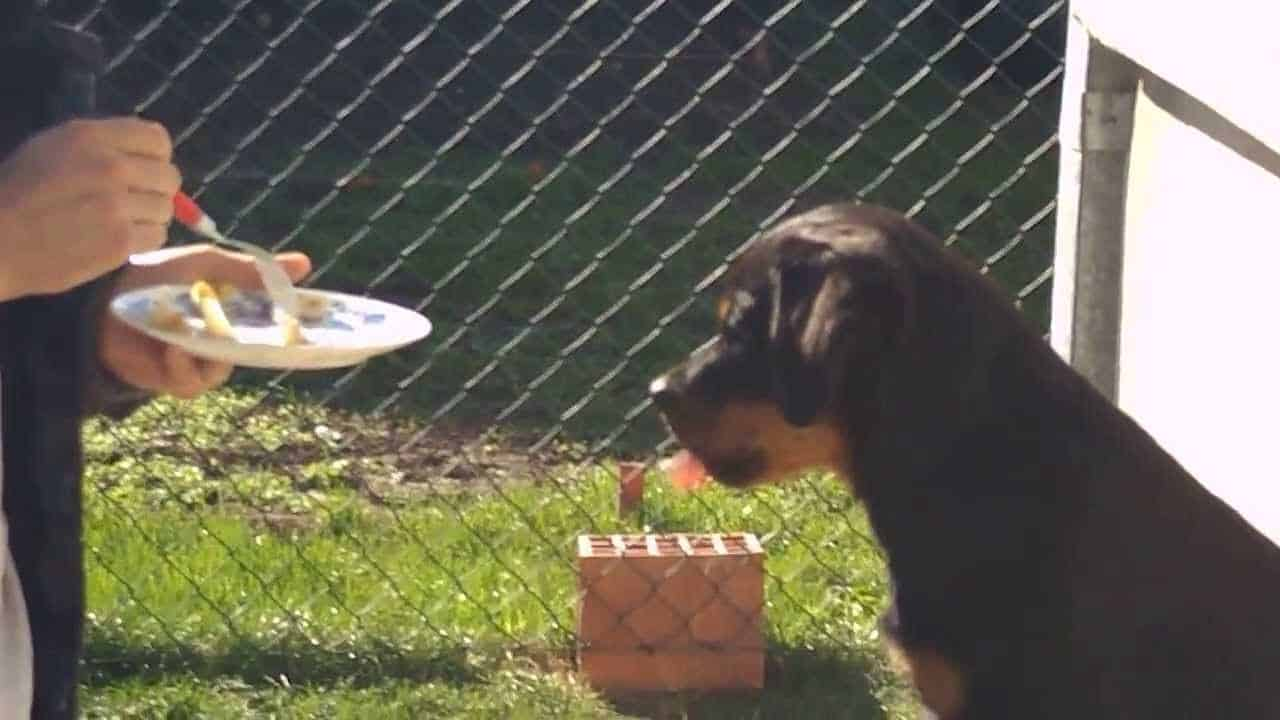fruit treats for Rottweilers