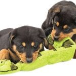 Toys for Rottweilers