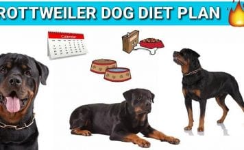 diet of your rottweiler
