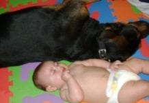 rottweiler photographs with aby