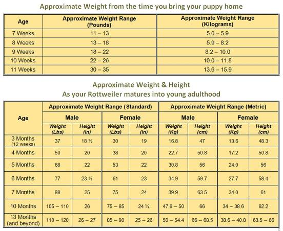 rottweiler weight chart