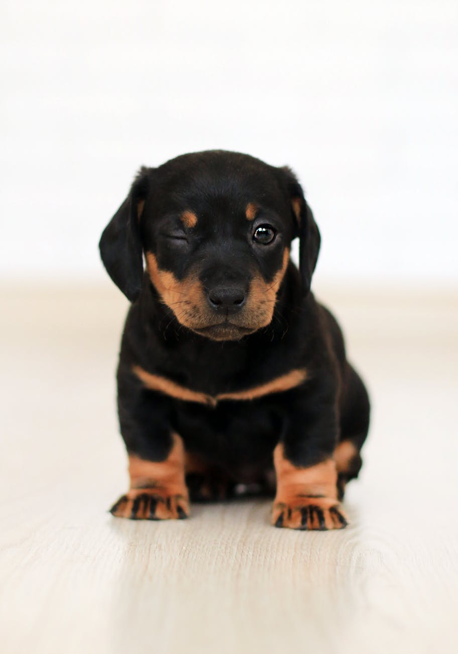 good Rottweiler signs
