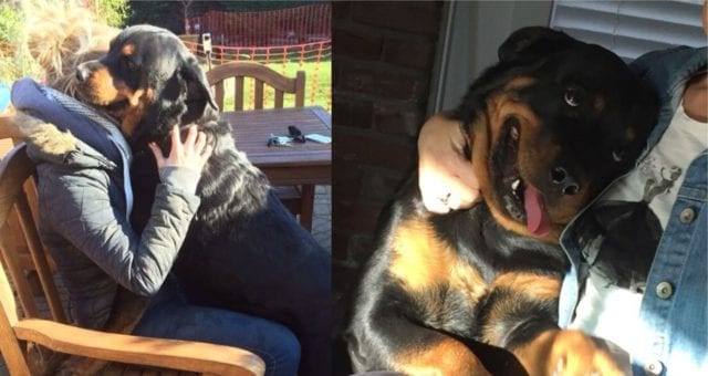 Thankful For Having A Rottweiler