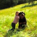 pregnant woman chose to get a rottweiler