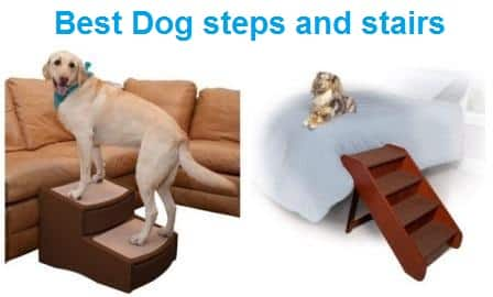 The Best Dog Steps for Beds in 2020