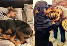 Rottweilers Can Change Your Life