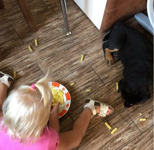 Rottweiler and baby